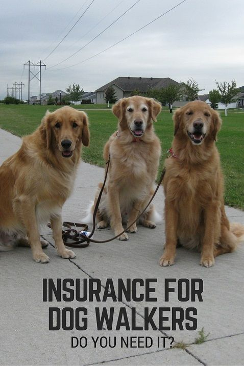 Insurance for dog walkers