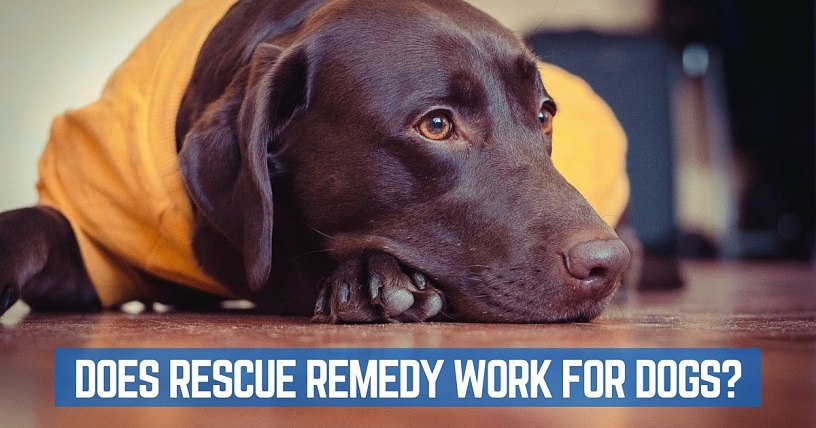 Does Rescue Remedy really calm a dog?