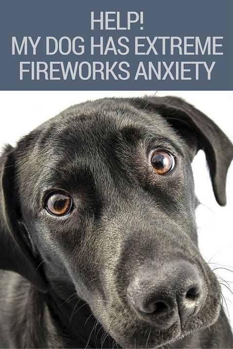 Dog has extreme fireworks anxiety
