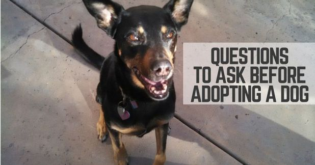 Questions before adopting a dog