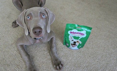 Remy with Droolers treats - Droolers treats review