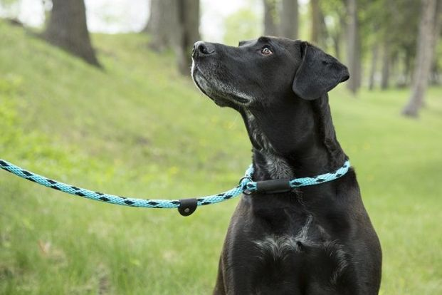 Slip leads for dogs