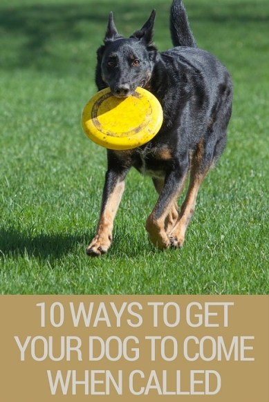 10 ways to get your dog to come when called