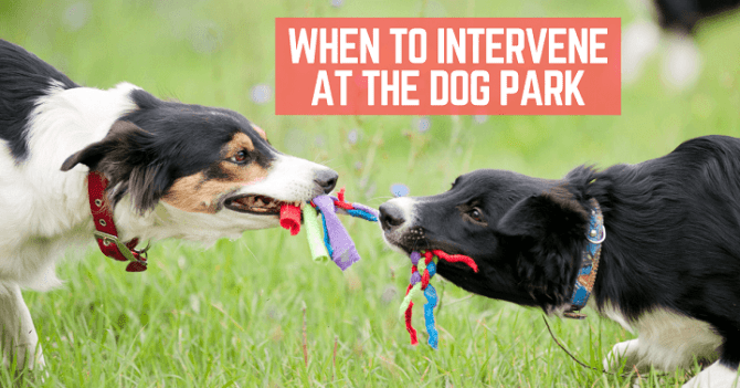 When to intervene at the dog park