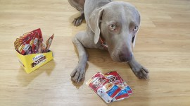 Delectables Dog Treat Review and Giveaway