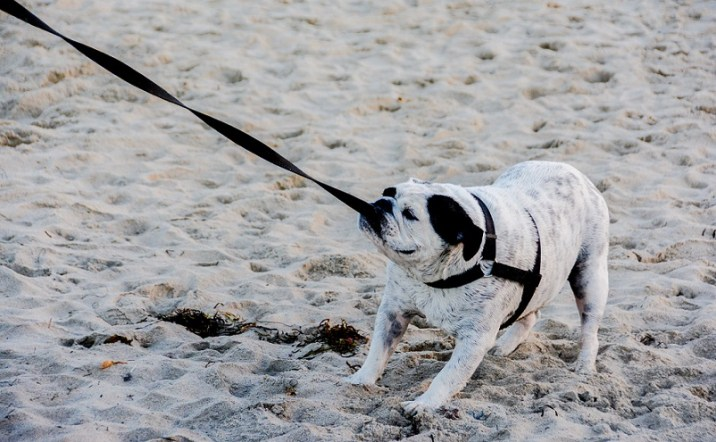 Dog refuses to walk