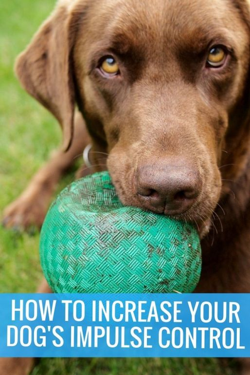 How to increase your dog's impulse control