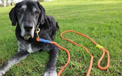 Why You Shouldn't Repeat Commands to Your Dog