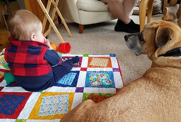 Baxter and our nephew - Tips on how to prepare your dog for a baby