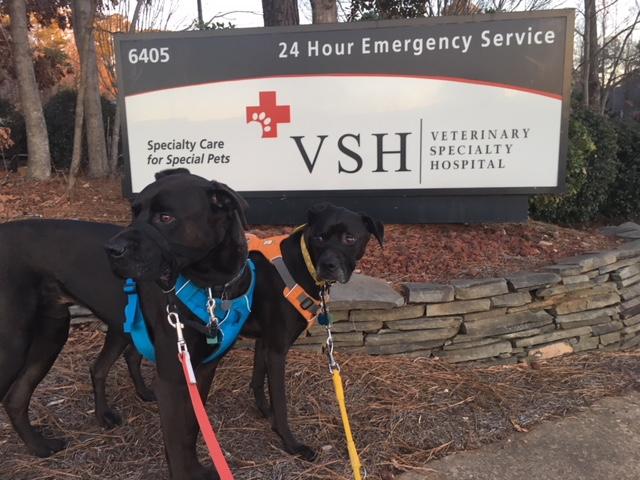 Missy and Buzz at Veterinary Speciality Hospital
