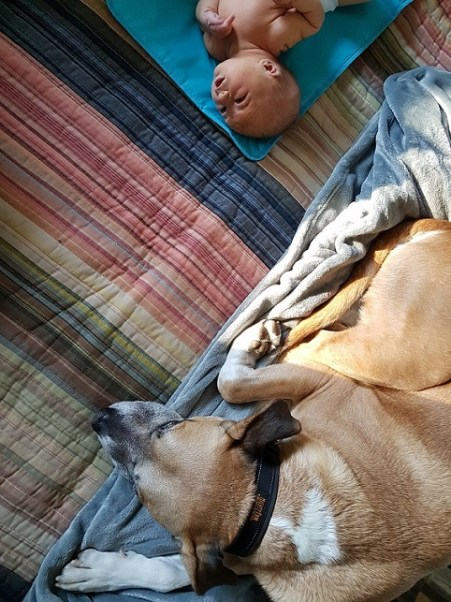 Creating safe spaces for your baby and your dog