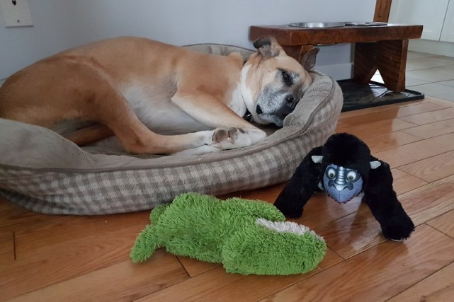 Baxter on his dog bed - safe spaces for your baby and your dog
