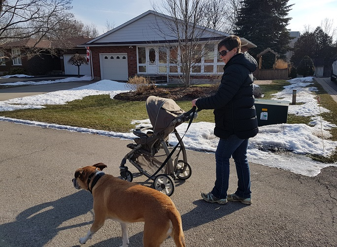 Train your dog to walk with a stroller
