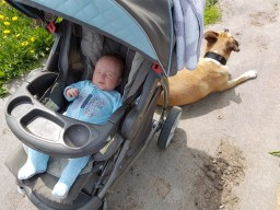 Resources on Preparing Your Dog for a Baby – What We've Learned
