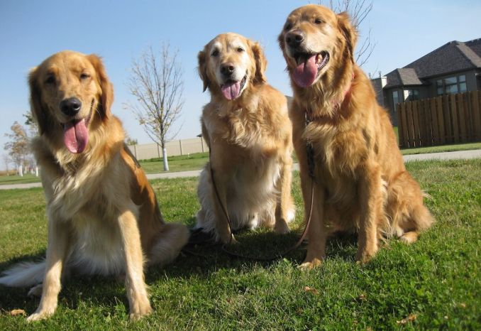 Leaving your dogs with a pet sitter