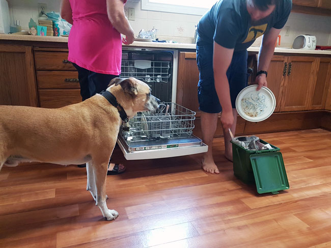 How to teach your dog leave it - Baxter supervising the dishwasher and garbage after dinner