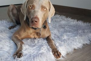 Memory Foam Orthopedic Dog Beds – Review & Giveaway!