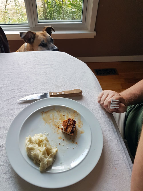 Baxter begging at the table - How to stop your dog's begging