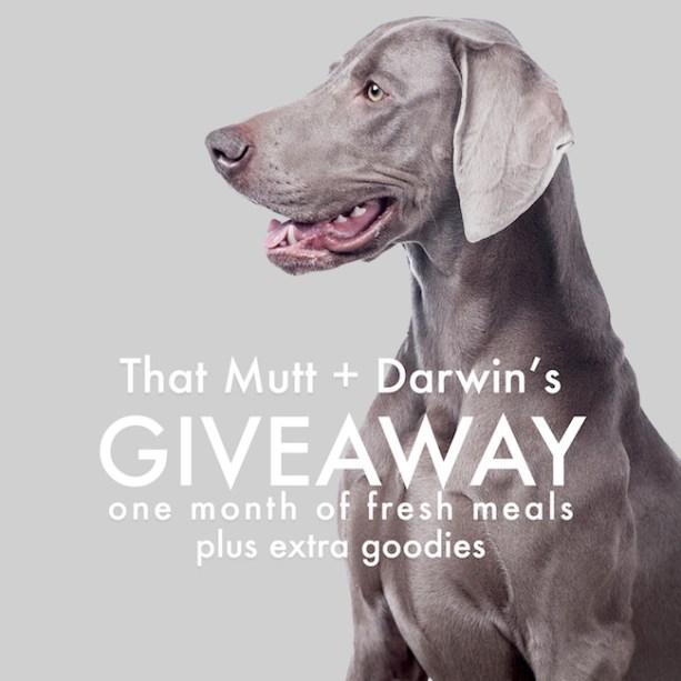 Darwin's raw dog food giveaway
