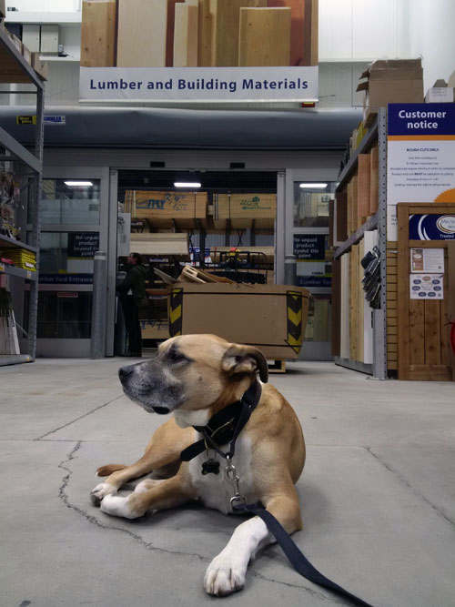 Baxter laying down while shopping - teach your dog to be patient