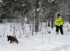 Intro to Search and Rescue Dogs