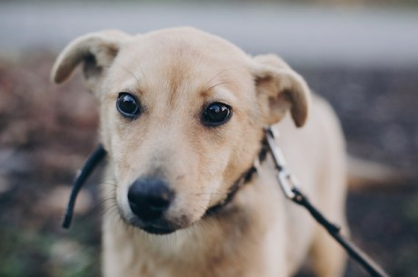 Dog anxiety - how to help my anxious dog