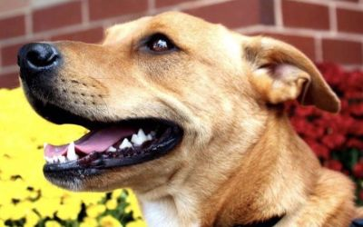 How to Help Your Rescue Dog Adjust to His New Home
