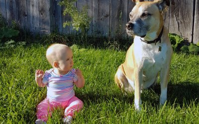 My Dog's First Year With A Baby
