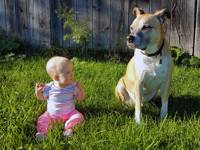 Baby and dog sitting on the grass