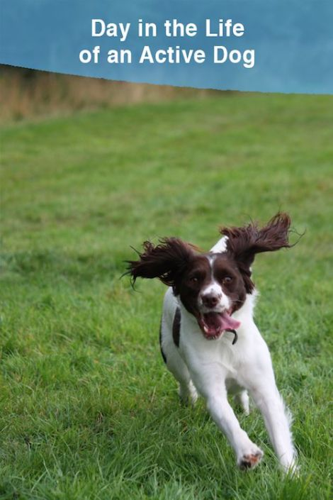 How to keep an active dog busy