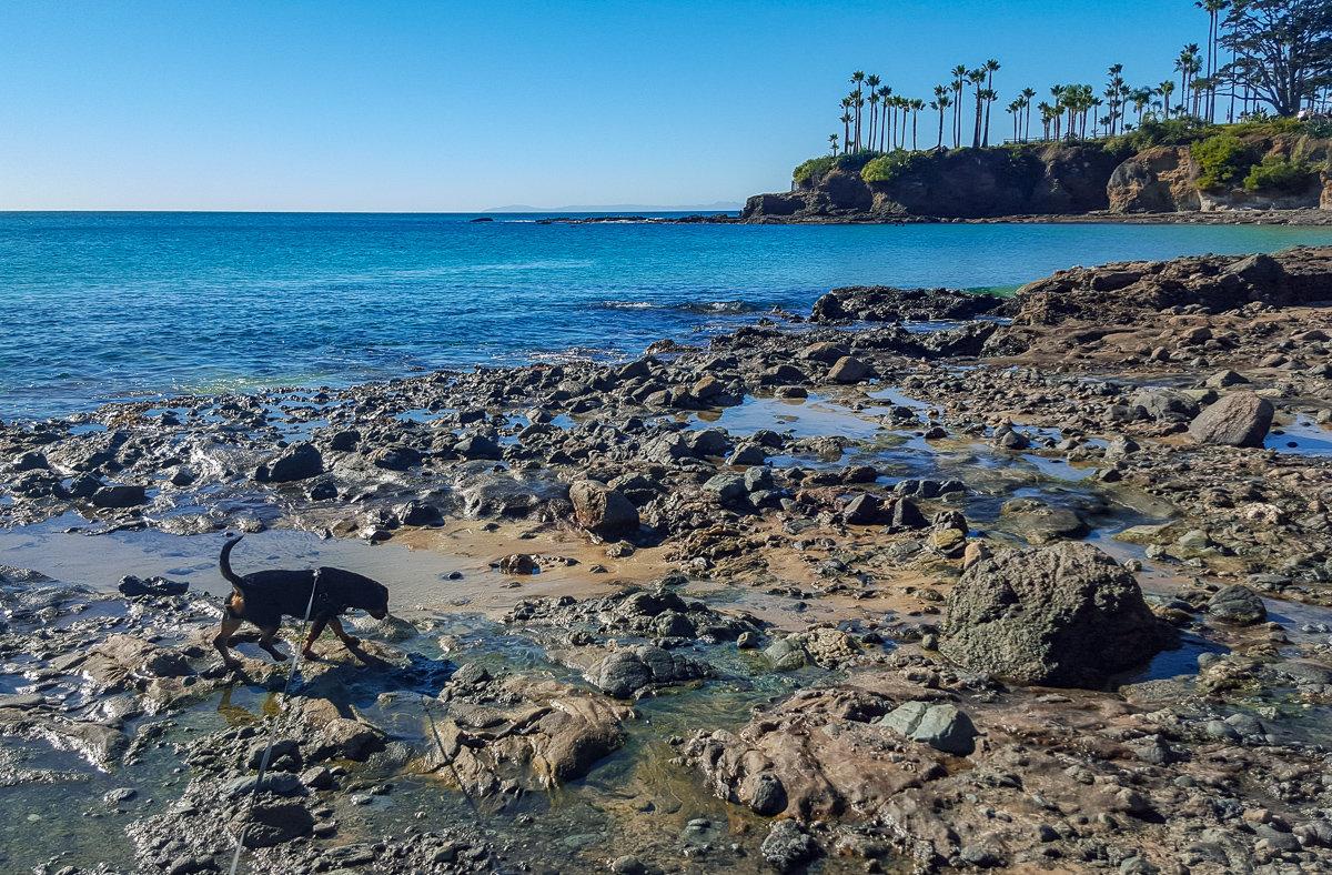 Tide pools in Laguna Beach