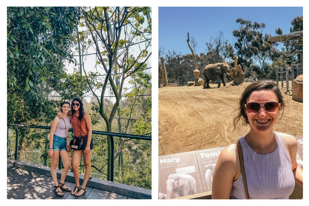 Visiting the San Diego Zoo