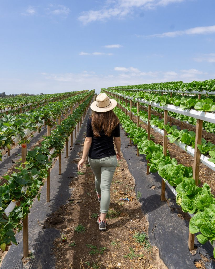 The U-Pick Veggie Tour at Tanaka Farms