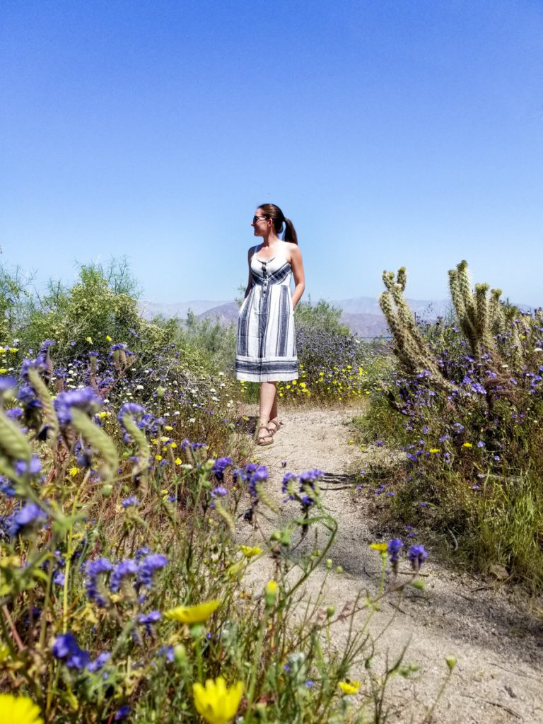 Walking trail at the Anza-Borrego Desert State Park Visitor Center