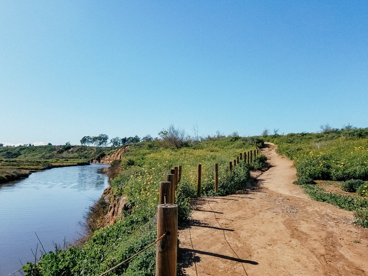 Hiking trail at the Upper Newport Bay Nature Preserve