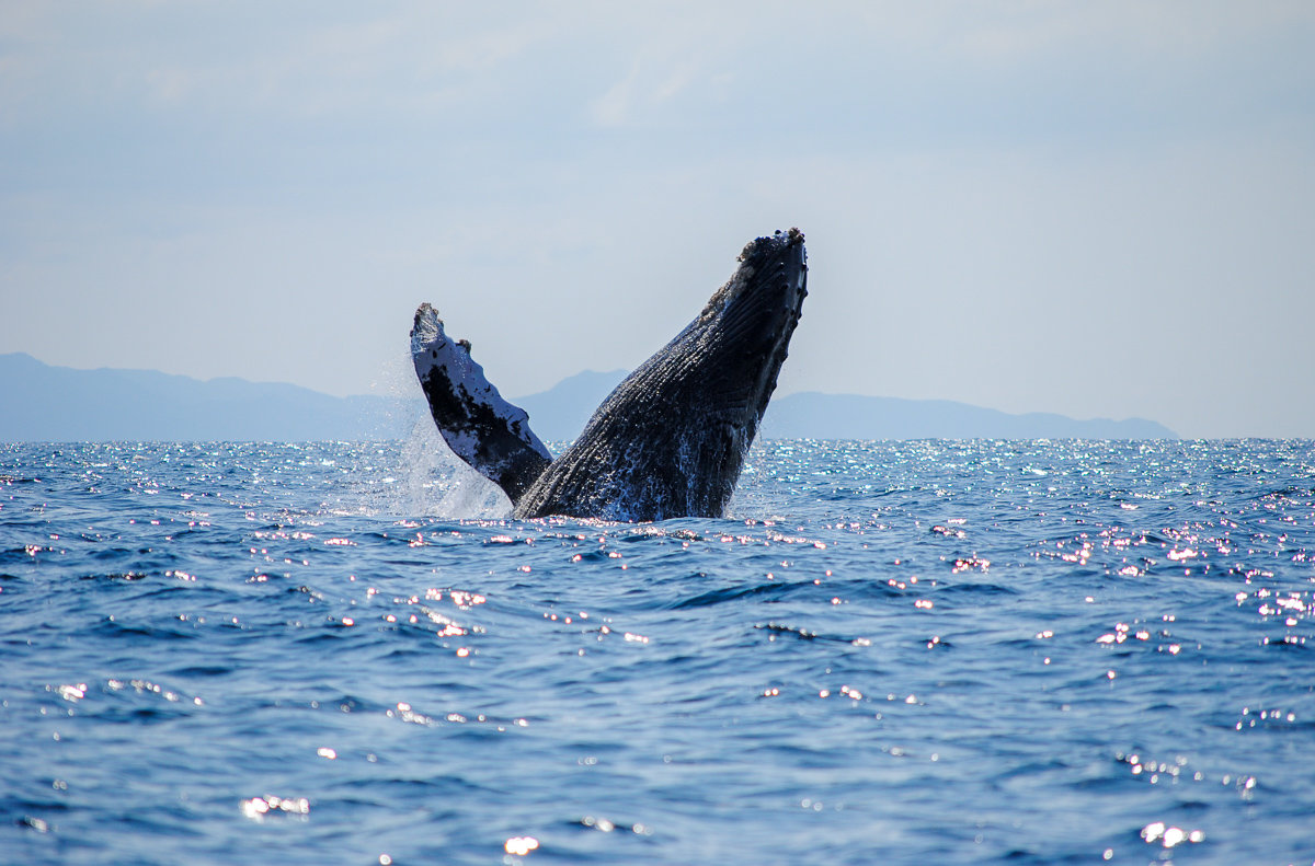 An amazing whale watching tour with Vallarta Adventures