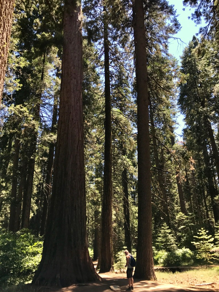 Sequoia's in Amerika