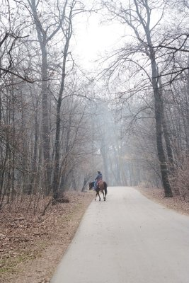 monza park italy outdoor hygge walk horse