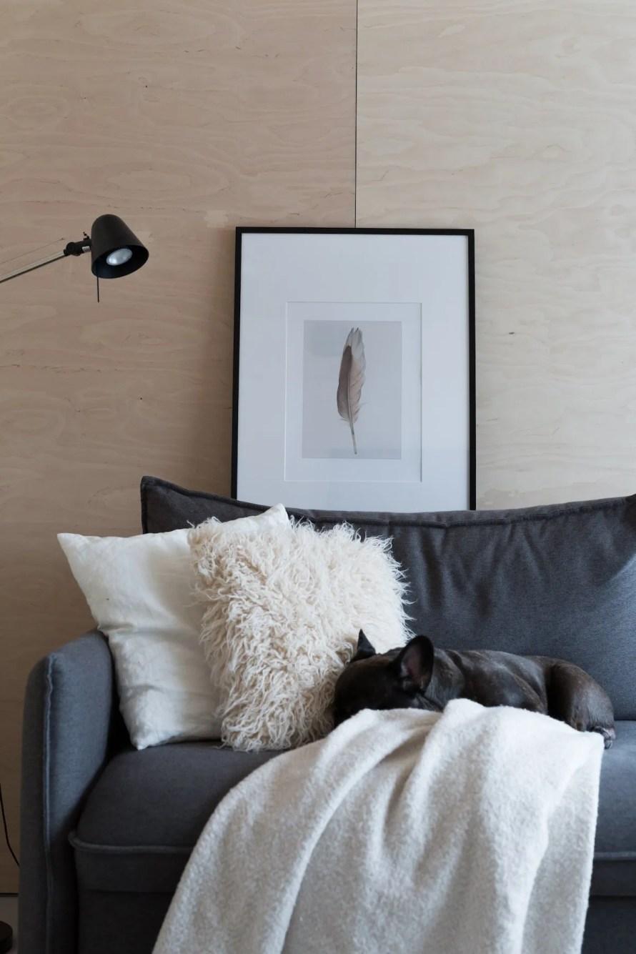 minishow home calm sofa dog