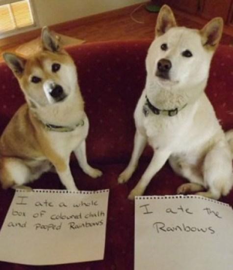 dog-shaming-14