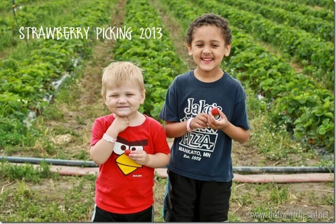 Strawberry Picking 2013