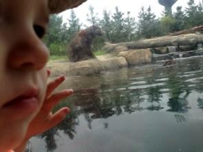jenson zoo