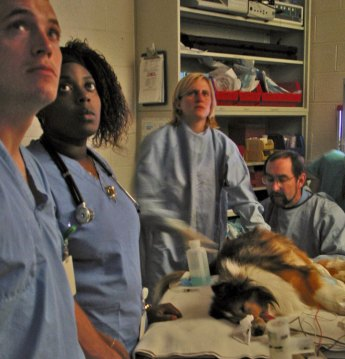 Students-dog-surgery