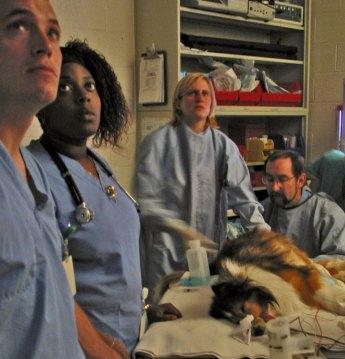 Students-dog-surgery