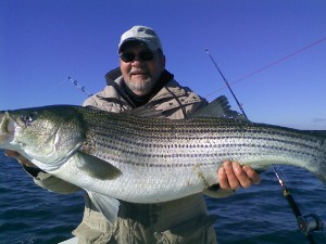 A keeper! Burton Rogers with a rockfish one can keep -- unlike the 228 undersize rock kept by a band of recreational fishermen who didn't bother to buy a license. Photo of Burt's pop by Burt.