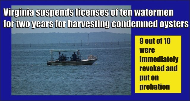 Virginia suspends licences of ten watermen for harvesting oysters from condemned area of James River