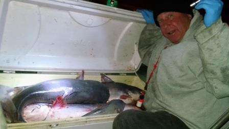 Before leaving Chesapeake region, Cap'n Larry caught big fish...photo by Catfish Bill Davis.