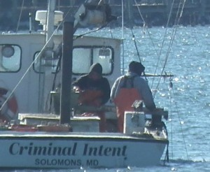 The Criminal Intent legally engaging in patent tonging in a permitted area on the Patuxent River. THE CHESAPEAKE TODAY photo