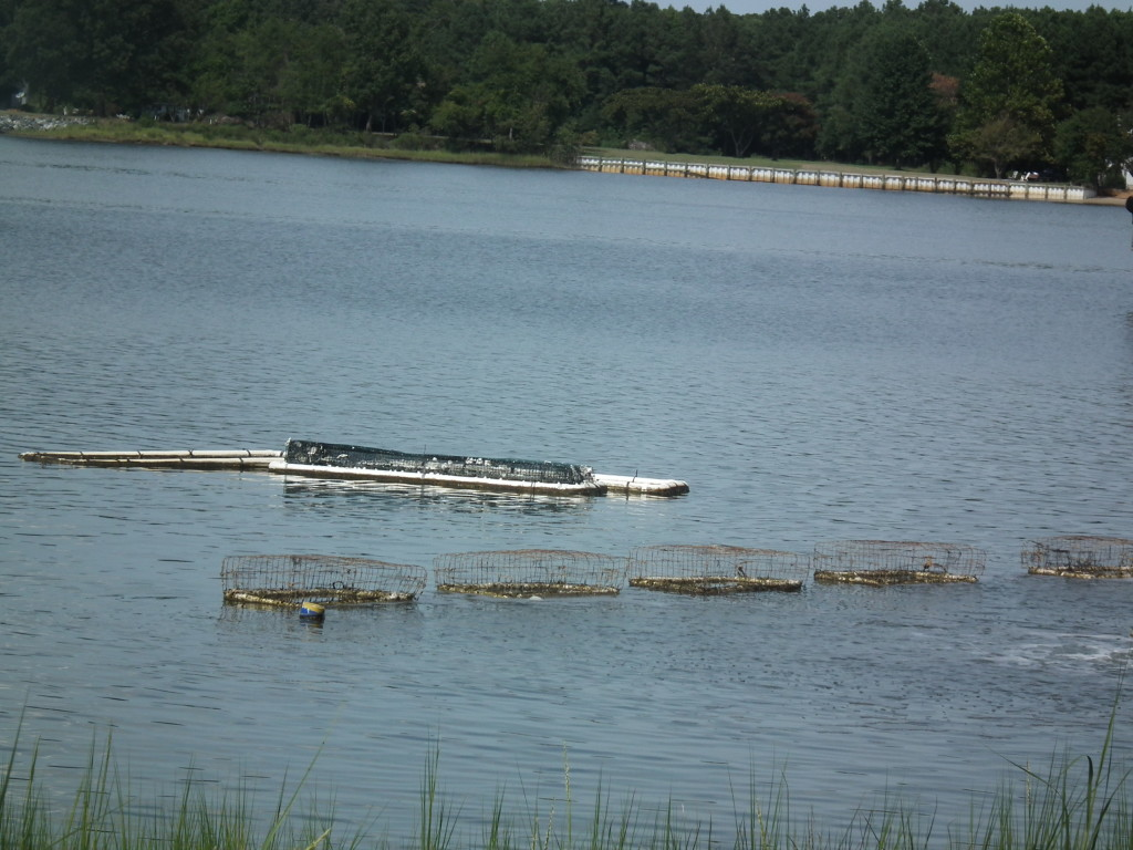 This oyster float operation is located on the Virginia Eastern Shore. THE CHESAPEAKE TODAY photo