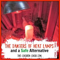 The Dangers of Brooder Heat Lamps and a Safe Alternative